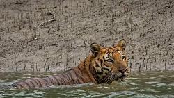 Sundarbans Day Tour