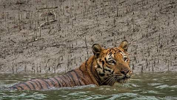 Sundarban 1N 2D Tour Package