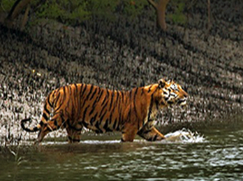 SUNDARBAN TIGER TRAIL TOUR
