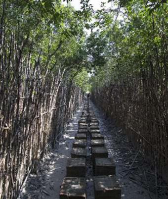 Burirdabri Mud walk