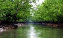 Sundarban Day Tour