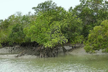Sundarbans 2 nights tour